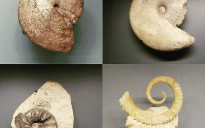 Waarom een tagline een fossiel is